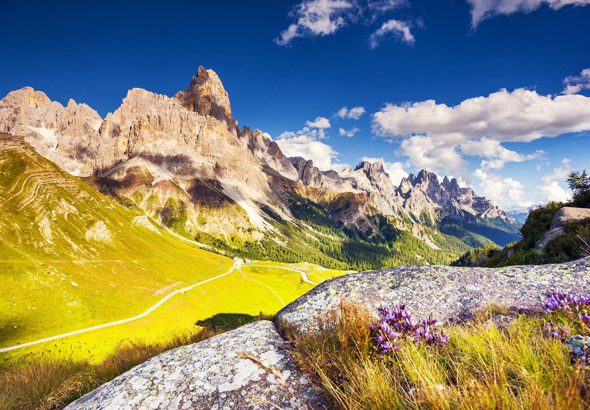 Berge im Herbst mit Blumenwiese