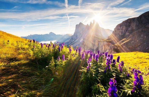 Berge Blumen Sonnenstrahlen